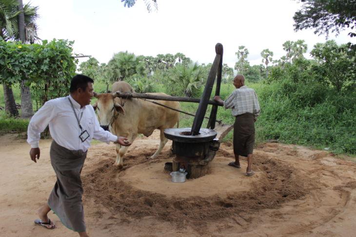 油を引く水牛