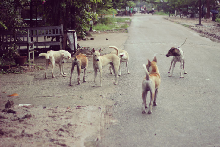 ミャンマーの日常風景11